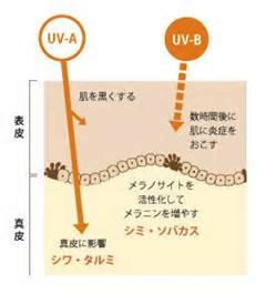 紫外線UVの説明